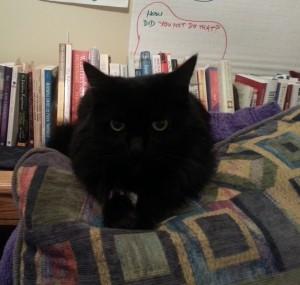 Alexa Cat 2013